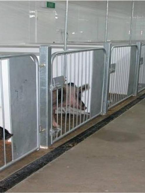 Awarua's Auckland Island pig quarantine facility. Photos supplied.