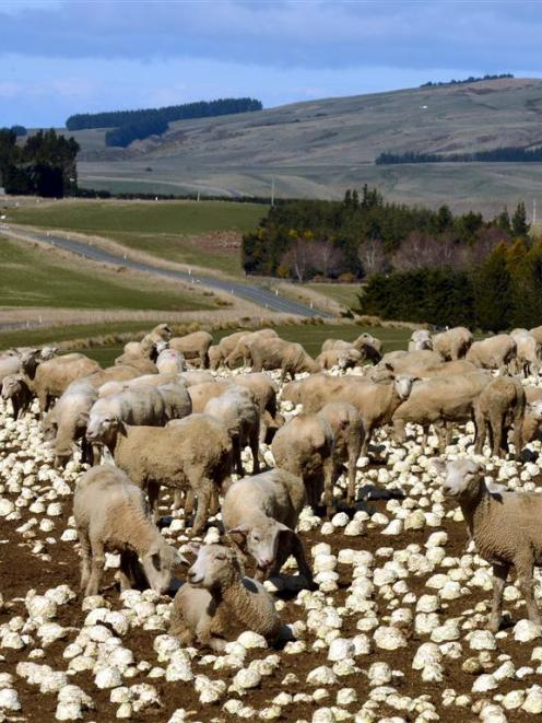 Beef + Lamb New Zealand says New Zealand's red meat sector is well positioned to exploit its...