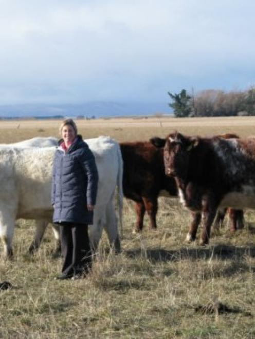 Bev Helm with some of her rising 3-year-old cows which are second calvers. Photo supplied.