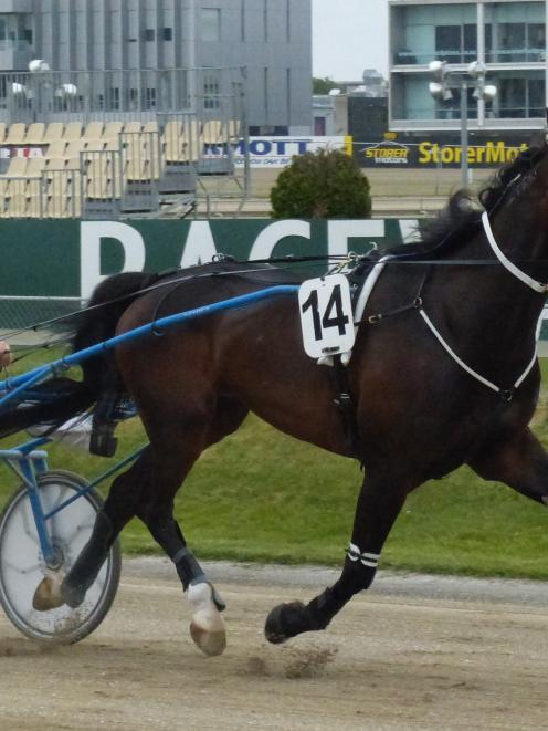 Boizel is one of two Dominion contenders for Pukekohe trainer Derek Balle today. Photo by Matt...