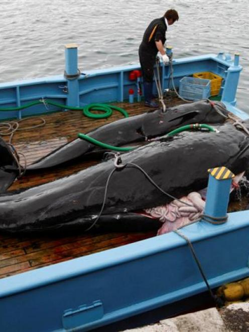 Captured short-finned pilot whales on the deck of a whaling ship.  REUTERS/Issei Kato/Files
