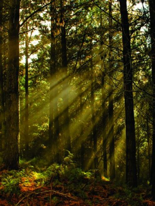 Carbon credit sales provided boost for City Forests. Photo supplied.