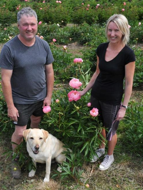 Commercial peony growers Rodger and Cindy Whitson, with Marley the dog, at Janefield Paeonies,...