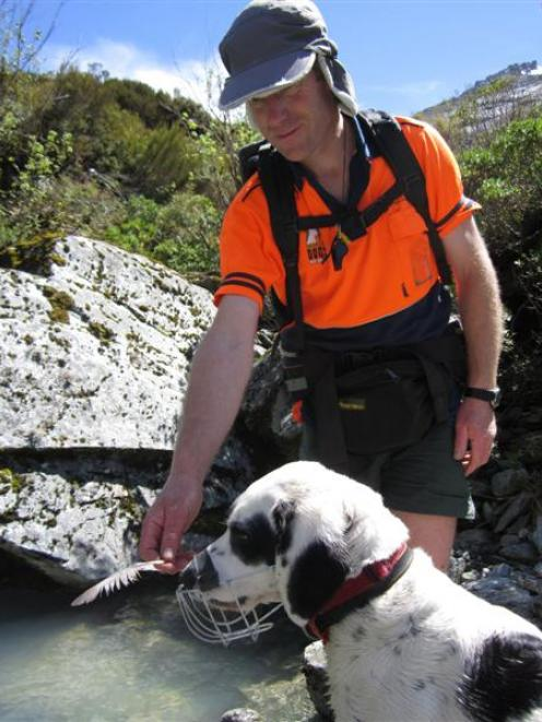 Doc ranger and handler Paul van Klink shows Hoki, a  4-year-old Border collie/springer spaniel...