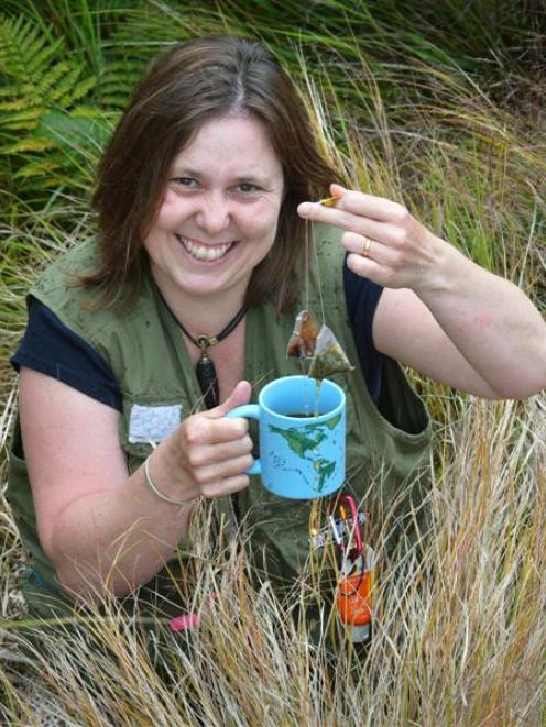 Dr Barbara Anderson, of Landcare Research, Dunedin, is using tea bags to help track climate...