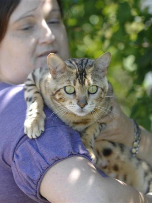 Dunedin cat breeder Teresa Richards considers Bengal cat Chrystal Cleopatra poses no more danger...