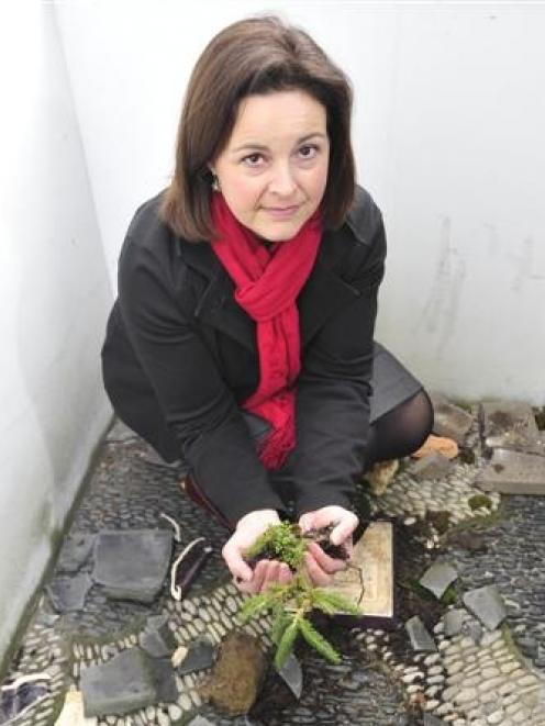 Dunedin Chinese garden manager Margo Reid with the remains of a penjing it had taken  years to...