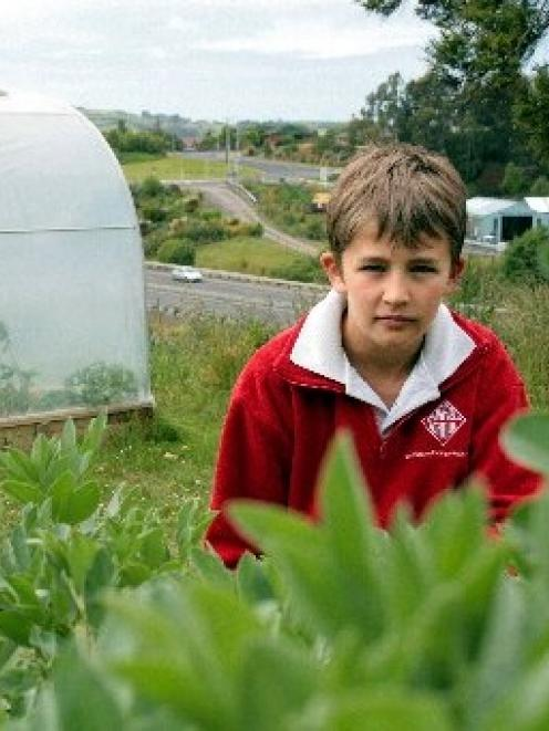 Fairfield School pupil Ben Wilden (10) checks the progress of broad beans that are being grown on...