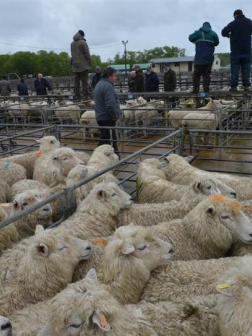 Falling lamb prices helped pull down the ASB Commodity Price Index. Photo by Stephen Jaquiery.