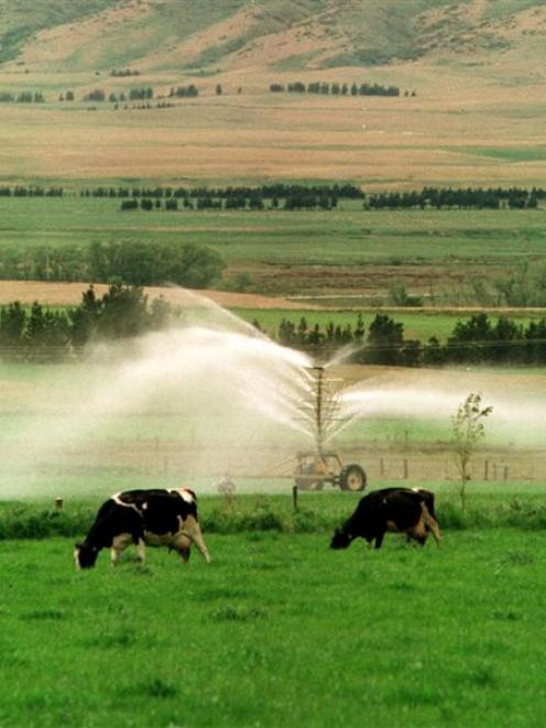 Farmers say water quality limits could threaten farm viability. Photo ODT files.