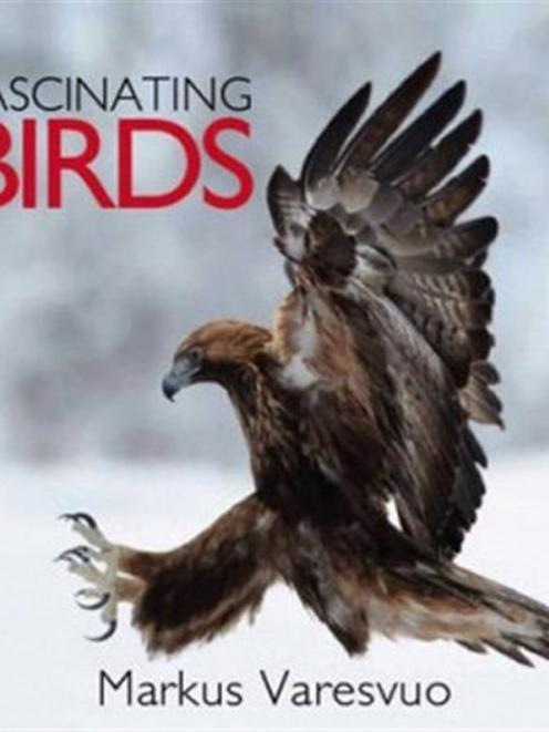 Fascinating birds <br> <b> Mark Varesuvo </b> <br> <i> New Holland