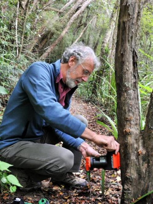 Forest and Bird project co-ordinator Mark Hanger sets a 'GoodNature' automatic trap in the...