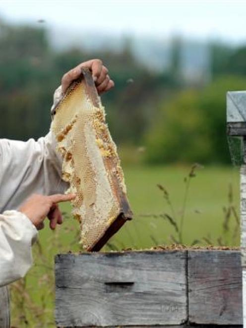 Former National Beekeepers Association of New Zealand president Frans Laas, pictured with honey...