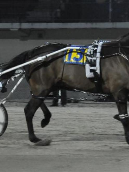 Former Otago pacer Terrorway, who will start in the Victoria Cup at Melton on Saturday. Photo by...
