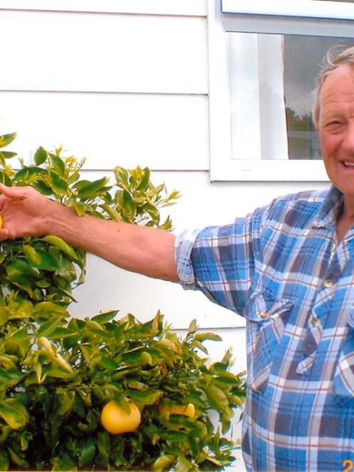 Gore resident Len Ross proudly displays the grapefruit growing at his Te Anau holiday home.