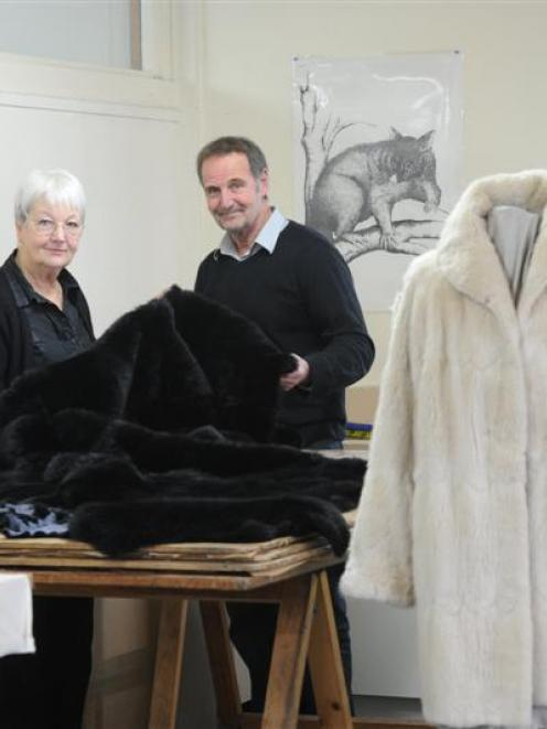 ca9d1204650 Heather Kirk and Max Wilson at work at Mooneys Furriers in Willis St. Photo  by