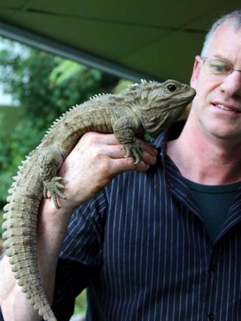 Henry The Tuatara With Curator Lindsay Hazley At Southland Museum Invercargill