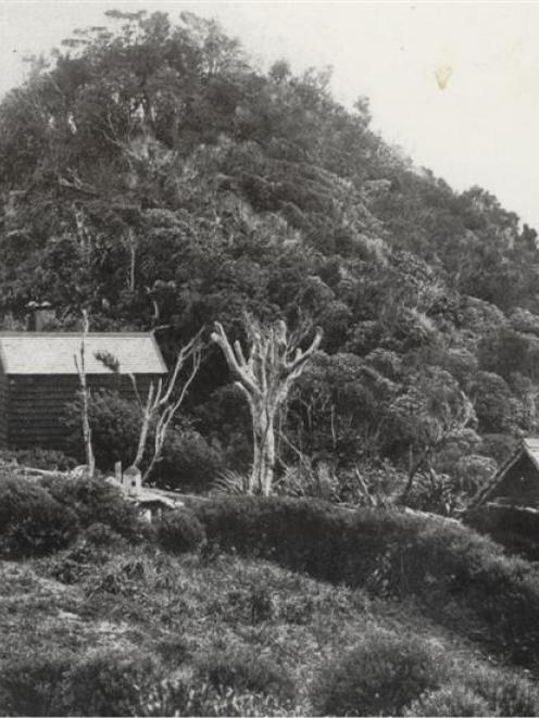 House belonging to early Fiordland explorer Richard Henry.