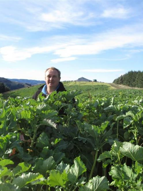 James Crutchley stands in his kale crop at Palmerston. Photo supplied.