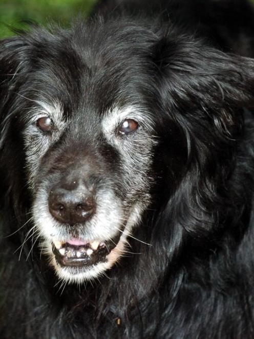 JD the dog. Photo by Gerard O'Brien.