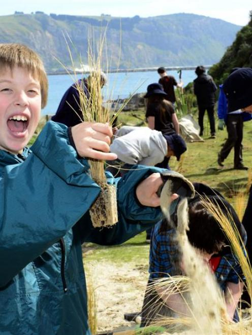 Justin Copson (11), of Arthur Street School in Dunedin, plants tussock at Pilots Beach, as part...