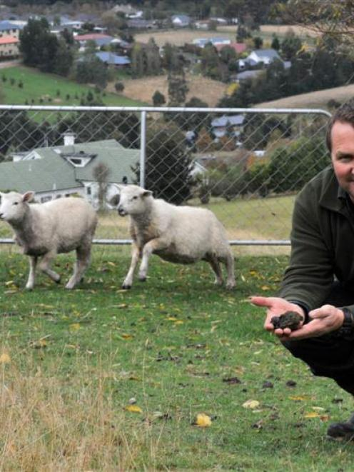 Kinmont property owner Chris Adams will be obliged to clean up after his sheep if the Dunedin...