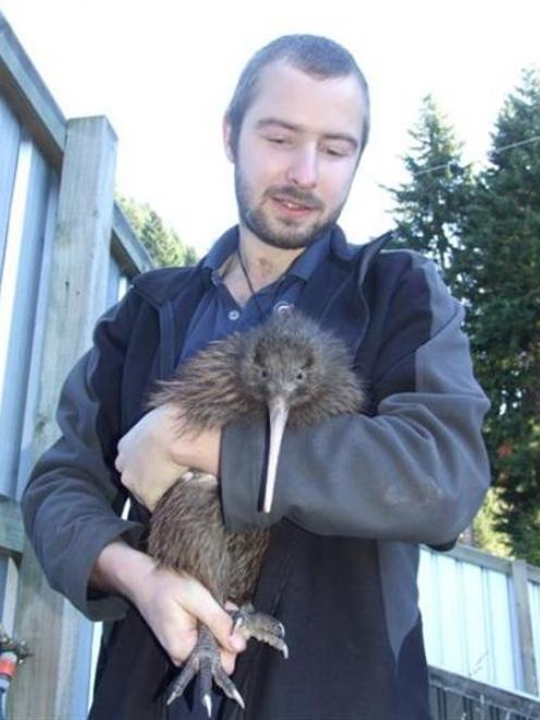 Kiwi Birdlife Park wildlife manager Paul Kavanagh prepares to put kiwi Nyoni into a travel box...
