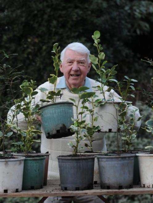 Les Cleveland with native trees destined to be planted at the wind-swept Woodhaugh Gardens in...