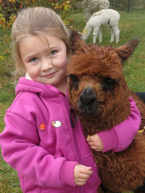Lexie McNaughton (4), of Springvale, Alexandra, gives alpaca cria Brownie a cuddle during the...