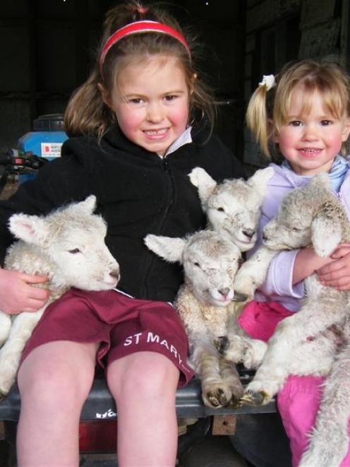 Lisa Miller (6) and her sister Emmarose (2) with the new arrivals on their family's Gore farmlet...