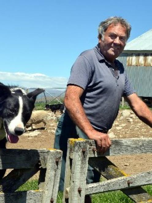 Lowburn farmer Jack Davis and dog Dick at work this week. Photo by Stephen Jaquiery.