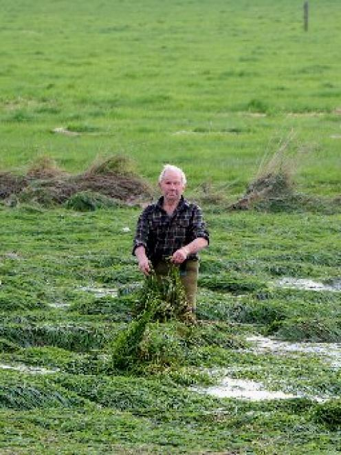 Lower Waitaki farmer Bill Pile stands in a flood channel at Hilderthorpe, where overgrown grass...