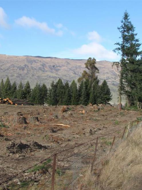 Many trees bordering Cardrona Valley Rd near the entrance to Wanaka have been felled recently....