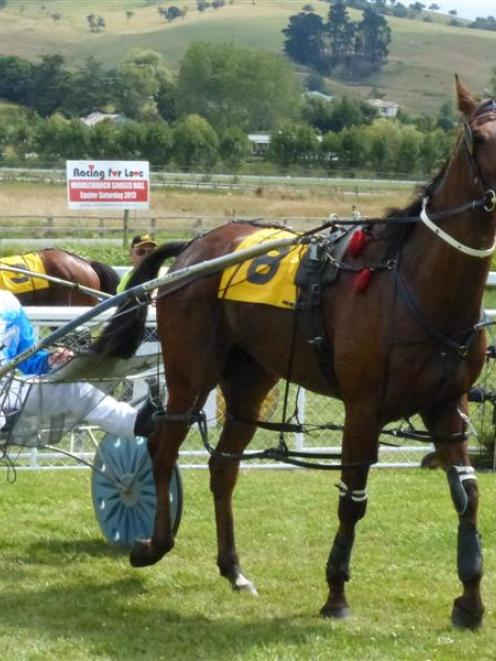 Matai Prince returns to the birdcage in the hands of driver Clark Barron after breaking maiden...