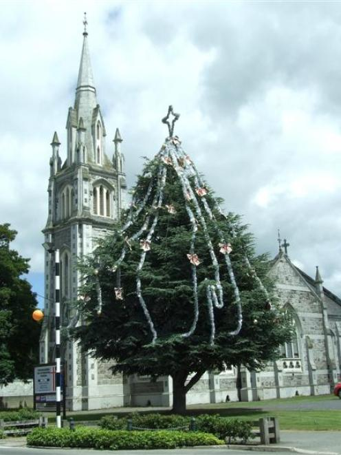 Milton's living Christmas tree in the grounds of the Tokomairiro Presbyterian Church was...