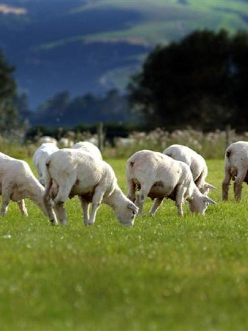 More than half of sheep and beef farmers expect their farm business performance to worsen next...