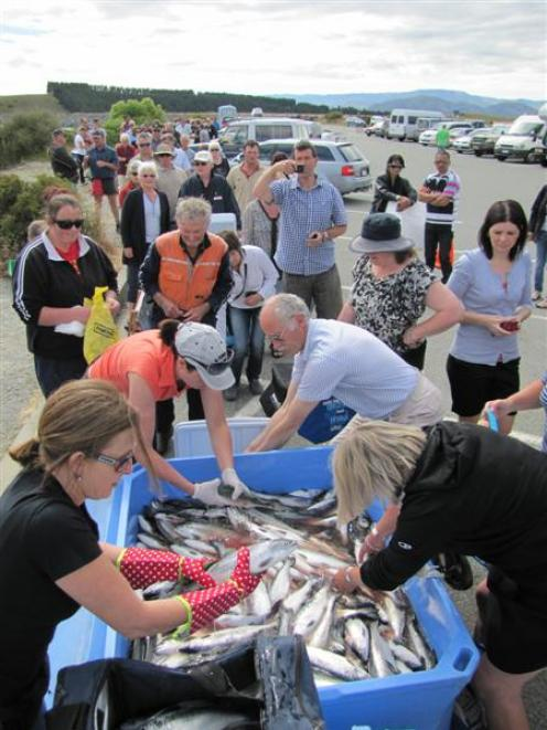 Mt Cook Alpine Salmon general manager Janine Tulloch (wearing red gloves) helps fill the bags and...