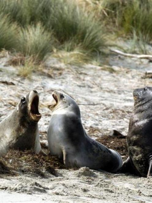 Much like those sea lions, is Dunedin somewhat misunderstood?