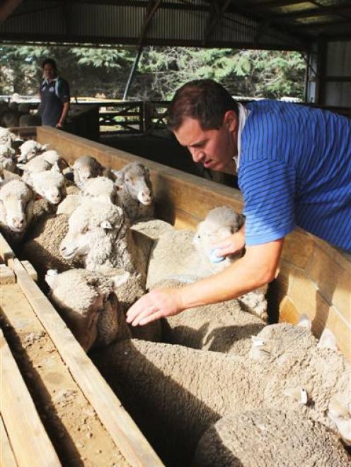 New Zealand Merino Company production science project leader Dr Mark Ferguson aims to help...