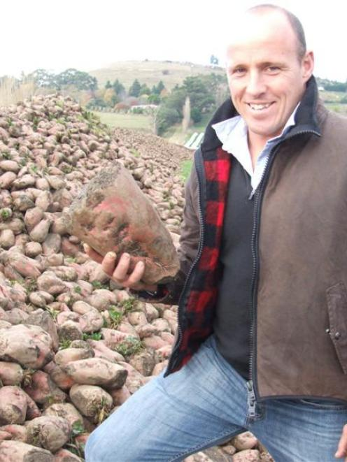 Nick Webster with an impressive pile of fodder beet which has been lifted. Photo by Sally Rae.
