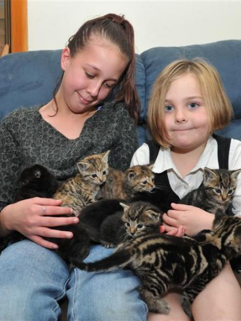 Nine kittens dumped near a swede stall yesterday settle in to their Mosgiel foster home with...