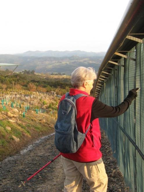 Orokonui Ecosanctuary volunteer Hilary Phillips checks the predator fence near the visitor centre...