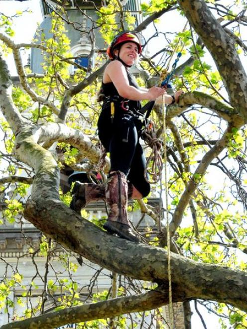 Otago Polytechnic arboriculture student Melody Jansen makes her way to the top of a plane tree in...