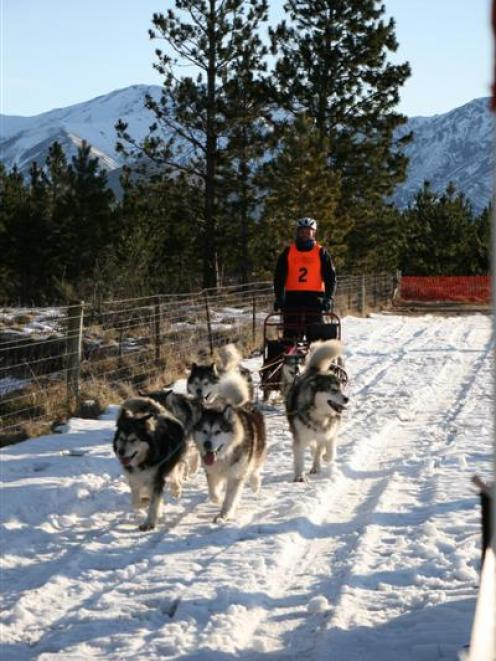 Otago Sled Dog Racing Association president Nigel Voice with Siberian huskies Soldier, Willow,...