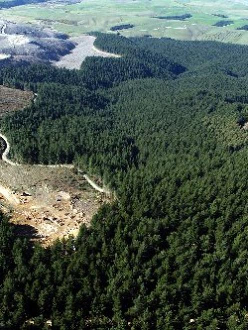 Owners of small and large forestry blocks, such as this one being felled for processing in...