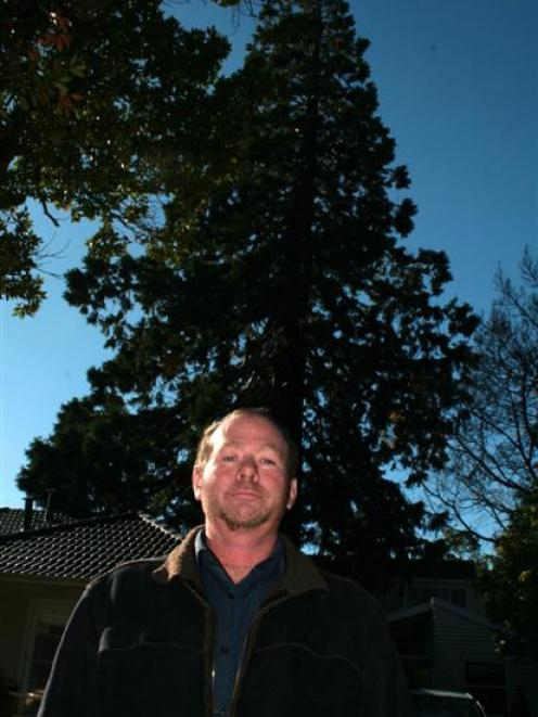 Pact property manager Ferdi Koen is dwarfed by a  wellingtonia tree which is to be cut down....
