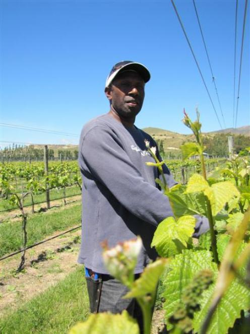 Peter Bumseng, from Port Vila in Vanuatu, spends New Zealand's warmer months working in Central...