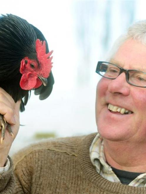 """Peter Keen holds his Australorp bantam Road Runner which he says is a """"bit of a star"""". Photo by..."""