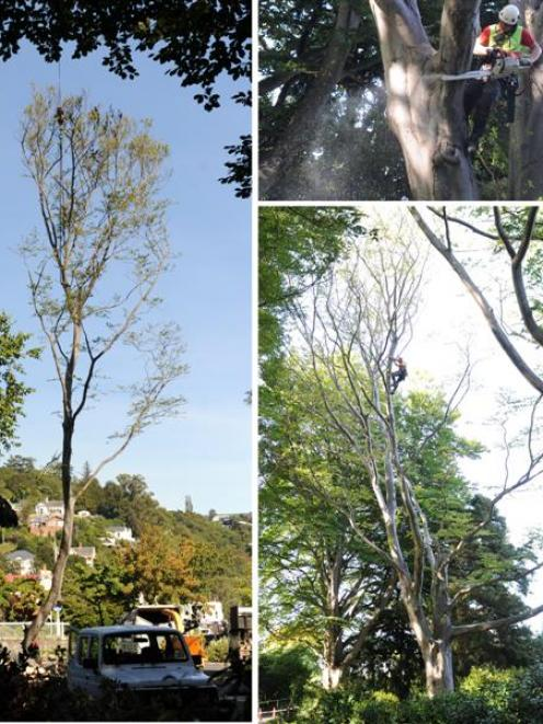 Port Chalmers arborist Jelte Buddingh, from Omni Tree, works with the help of a crane to remove...