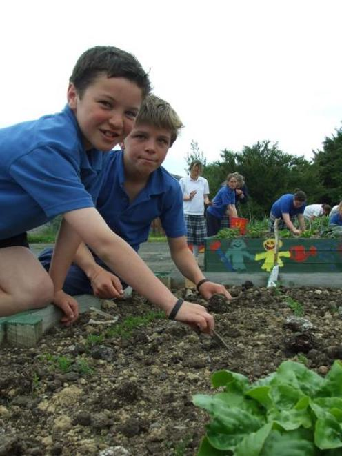 Pupils Kane Heka (11) and Ayson White (12) tend  carrots in the Owaka Community Gardens. Photo by...